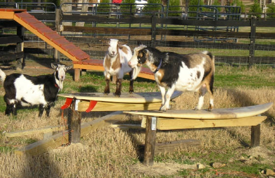 GOAT MILK STANDS AND PLAYGROUNDS